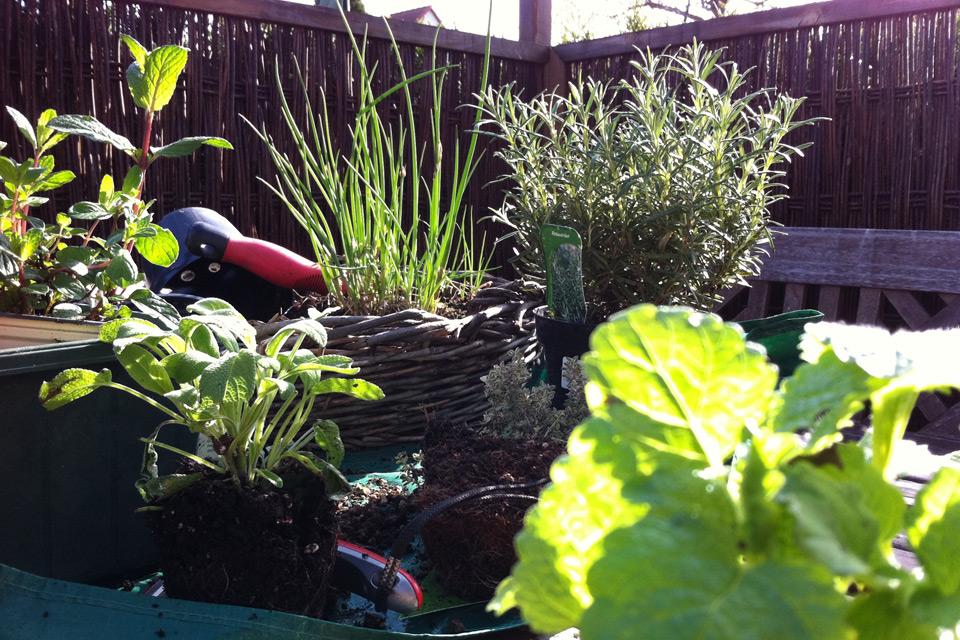 salat erdbeeren radieschen tomaten k beln balkon pflanzgef e verwenden erde tagen. Black Bedroom Furniture Sets. Home Design Ideas